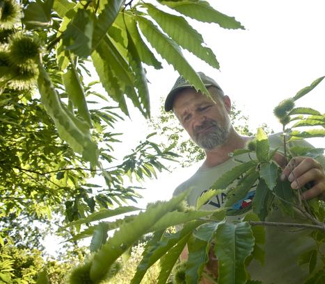 The giving tree: Agroforests can heal food syst...   Wellington Aquaponics   Scoop.it