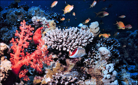 Paleoclimatology: Climate Close-up : Feature Articles | Coral Reefs | Scoop.it