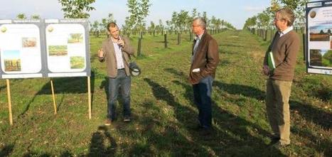 Dans deux ans, on récoltera des noix en Beauce | Agriculture en Dordogne | Scoop.it