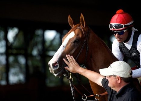 California Chrome, Rested and Renewed, Returns to His Blue-Collar Roots | Horse Racing News | Scoop.it