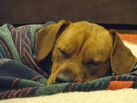 Kennel Cough - Symptoms, Prevention and Treatment | Natural Pet Care | Scoop.it
