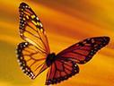 3 Transformational Leadership Traits   MBA Women International                     Leadership Academy   Scoop.it
