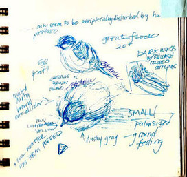 Drawn to...conferences? How sketching can enhance your science conference experience | Learning at Conferences | Scoop.it