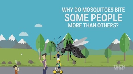 Fatal Attraction: Why are mosquitoes attracted to certain people? | Payday Loans Ontario | Scoop.it
