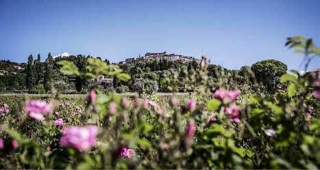 Le parfum et le territoire: retour en Grasse | Influences olfactives | Scoop.it