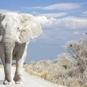 Under the auspices of white elephants?! The origins of phrases, punctuation marks, and Cockney rhyming slang | Multilingualism | Scoop.it