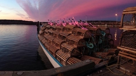 Government 'cautiously optimistic' about future of lobster population | Nova Scotia Fishing | Scoop.it