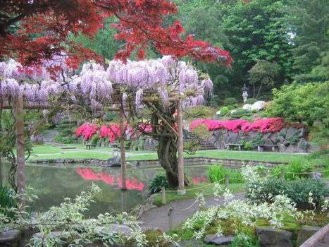Garden Picture Gallery: Japanese Gardens | Japanese Gardens | Scoop.it