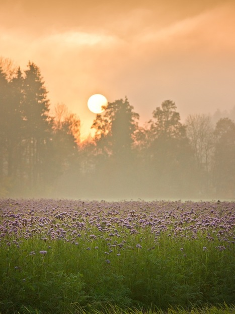 Environmental Gratitude and Ecological Action | Sustainable Planet | Scoop.it