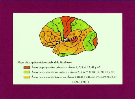 Psicobiología del género Homo: Neurociencia   El cerebro y yo. Necesidades y características.   Scoop.it