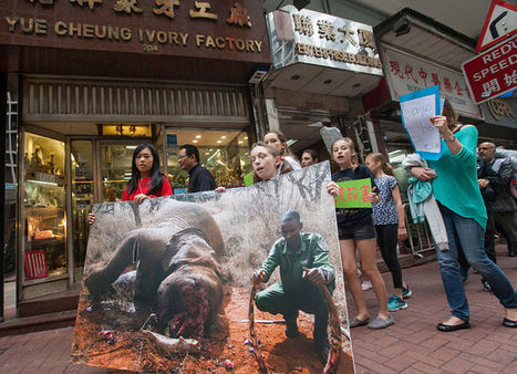 Hong Kong rocked by anti-poaching protests | Wildlife Trafficking: Who Does it? Allows it? | Scoop.it