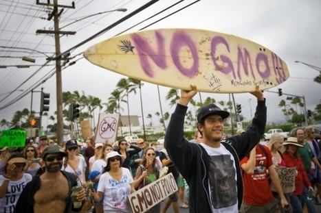 Mayor of Hawaii's Big Island signs anti-#GMO bill into law! Who follows? | Messenger for mother Earth | Scoop.it