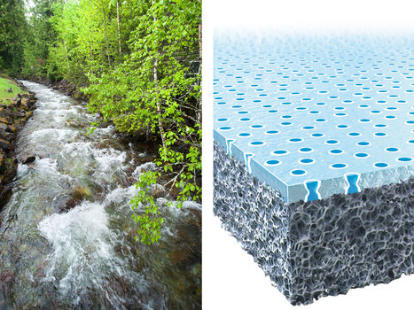 14 Smart Inventions Inspired by Nature: Biomimicry | Biomimétisme - Biomimicry | Scoop.it