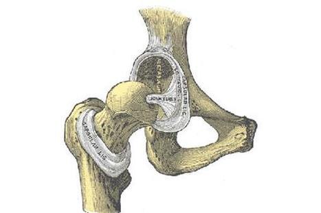 Dutch scientists develop 3D printed fiber structures for bone cartilage repair on a large scale | 3D_Materials journal | Scoop.it