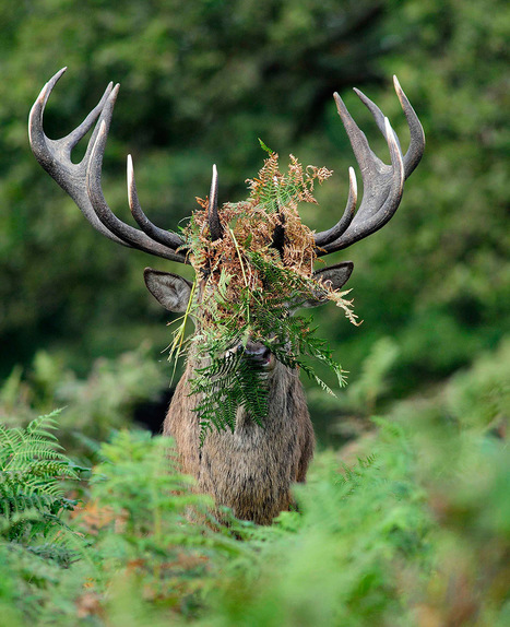 Hilarious Winners of the First Annual 'Comedy Wildlife Photography Awards' | coolpics | Scoop.it
