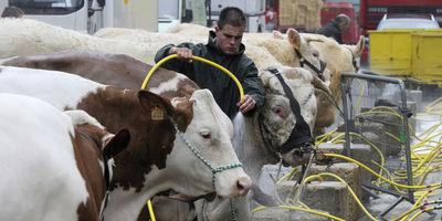 Les animaux d'élevage français gavés de soja OGM importé | A better world | Scoop.it