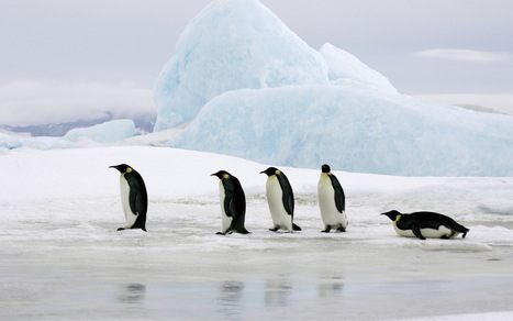 The World's Last Great Wilderness - Antarctic Oceans Alliance | Antarctica | Scoop.it