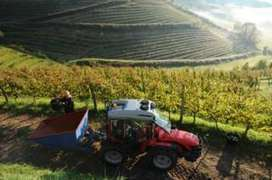 Will France's new wine regions threaten Champagne tradition? - BBC News | Champagne Chronicles | Scoop.it