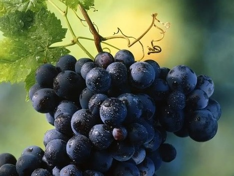 Just Beautiful - Worldwide: The Many Health Benefits of Grape Seeds   All About Your Beauty and Health   Scoop.it
