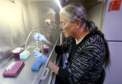 UA researchers devise test to aid shrimp farmers   Arizona Daily Star   CALS in the News   Scoop.it