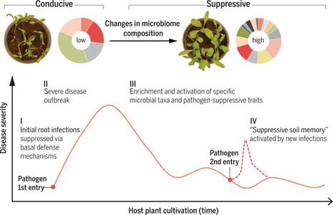 Soil immune responses | How microbes emerge | Scoop.it