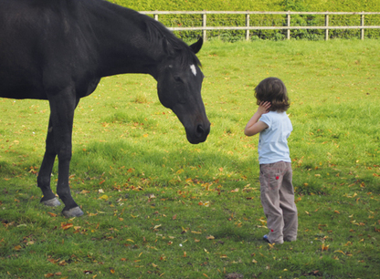 New research shows that horses make us happy | Dyr, animals, behaviour and training | Scoop.it
