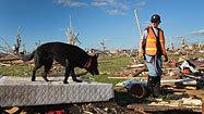 Good dogs: The list - Los Angeles Times   Dog Training Classes Alpharetta   Scoop.it
