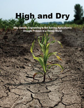 High and Dry: Why Genetic Engineering Is Not Solving Agriculture's Drought Problem in a Thirsty... | UCSUSA | Plant Breeding and Genomics News | Scoop.it
