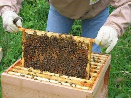 Arı Kovanı | Red Honey Macun | saglik | Scoop.it