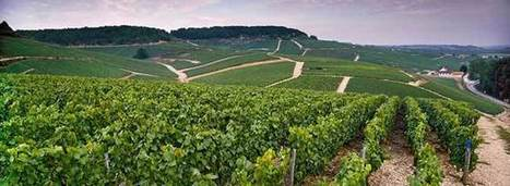 The Reality of Minerality | Wine News & Features | wine-searcher | Grande Passione | Scoop.it