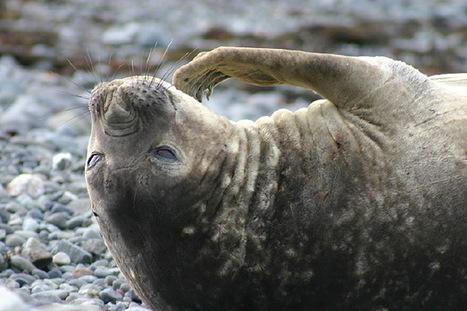 blog : quelques mois aux Kerguelen  © Paul Kerrien - http://toilapol.net | Arctique et Antarctique | Scoop.it