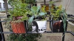 Mini-potager : le Dadagreen s'expose aux Tuileries | agriculture urbaine | Scoop.it