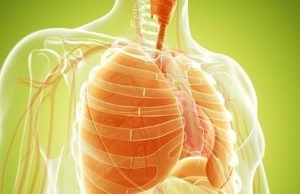 Cigarette : suivez ces conseils pour nettoyer vos poumons | Santé | Scoop.it