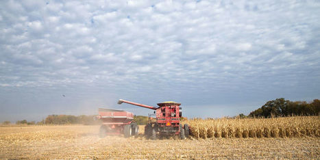 L'Egypte ergote sur le blé français   Mystère de PONT SAINT ESPRIT   Scoop.it