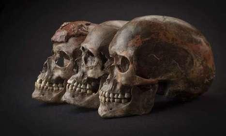 Genetic analysis of Ice Age Europeans   Aux origines   Scoop.it