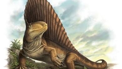 Ancient predators grew 'steak-knife' teeth - CBC.ca   Ancient Origins of Science   Scoop.it