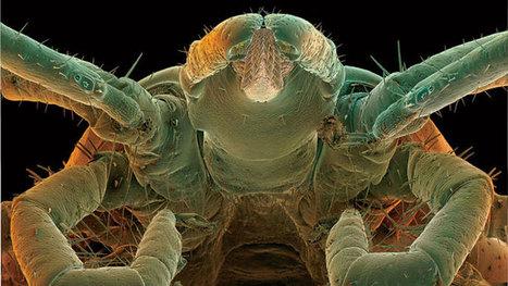 Is Lyme Disease an STD? - Outside Magazine | Lyme Disease | Scoop.it