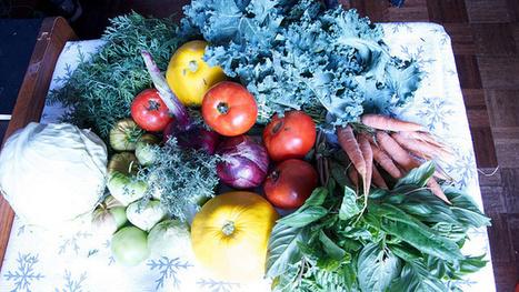 Eat an Allergy-Friendly Diet to Keep Seasonal Allergies at Bay   Beat Allergic Rhinitis and Allergies Naturally   Scoop.it
