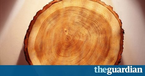 Traces of sun storms locked in tree rings could confirm ancient historical dates | Fragments of Science | Scoop.it