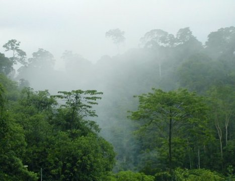 New Platform Reveals How Much Carbon is Locked in Tropical Forests – and How Much Was Lost « Global Forest Watch | GarryRogers Biosphere News | Scoop.it