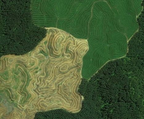 Eye on the Tiger: Satellite Images a New Tool for Conservation | Remote Sensing News | Scoop.it