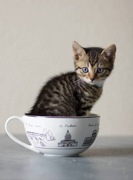 17 Kittens That Are Too Cute To Handle. #2 Seriously Brightened Up My Day | Food for Pets | Scoop.it