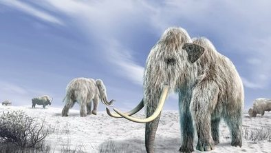 'Climate change' killed off mammoths | Ecosystems | Scoop.it