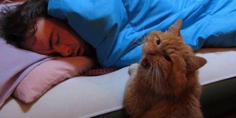 Le chat: le parfait remplaçant du réveil-matin | CaniCatNews-actualité | Scoop.it