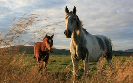 Life-Changing Horse Nutrition Testimonials for Stem Cell Enhancer Granules Added To Horse Feed | Your Wealth Is Your Health! | Scoop.it