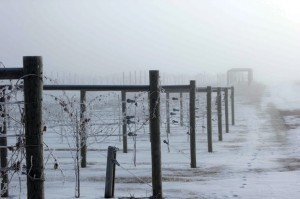 Marquette: A grape worth getting to know - Napa Valley Register | 'Winebanter' | Scoop.it