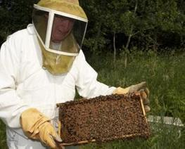 Slovenia set to celebrate World Bee Day on Friday | NH Voice | L'apiculture dans le monde | Scoop.it