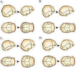 Homo floresiensis, une espèce distincte d'Homo sapiens | Aux origines | Scoop.it