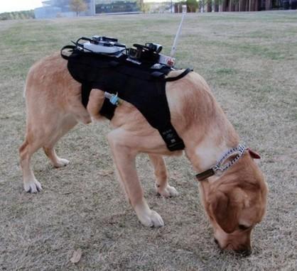 Un robot, un drone et un chien travaillent ensemble pour secourir les victimes de catastrophes   Robotique & Intelligence artificielle   Scoop.it