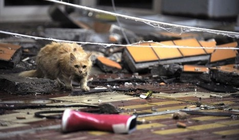 Forgotten victims of man-made catastrophe: cats, dogs and ostriches dying around Fukushima, waiting for owners   earthmergency   Scoop.it